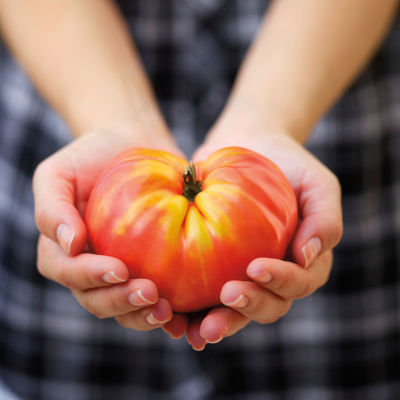0814 fresh tomato y9iaip
