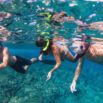The snorkel safari leading 1 hgguxe