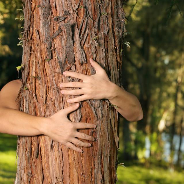Treehugger nbxphw