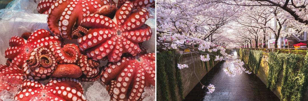 0116 tsukiji fish market meguro river nakameguro tokyo wocnbs