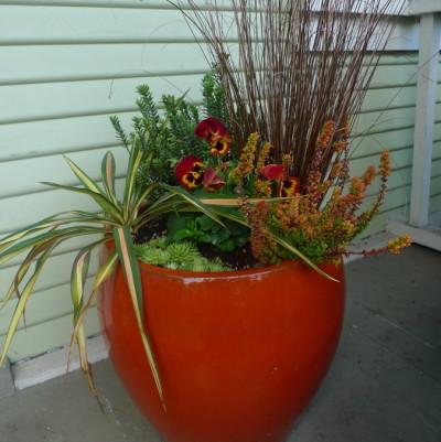 Orangeplanter vgfn0d