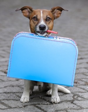 Dog with suitcase in its mouth