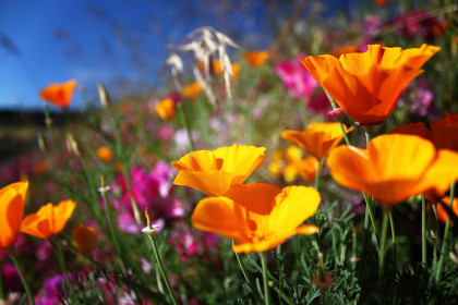 Thumbnail for - The Northwest's 8 Best Wildflower Hikes