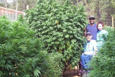 Medmarijuana ys6hla