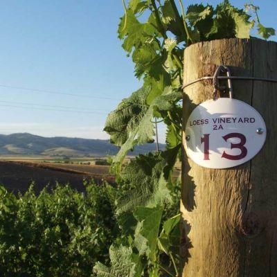 Loess vineyard v8khrb