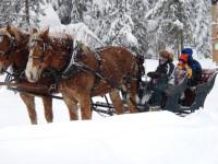 8 sleigh