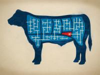 savor-bavette-steak