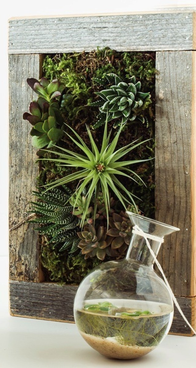The Next Generation Of Houseplants And Terrariums Portland Monthly