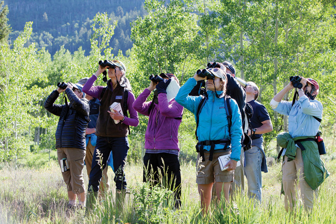 0515 aspen bird watchers s9ibvy