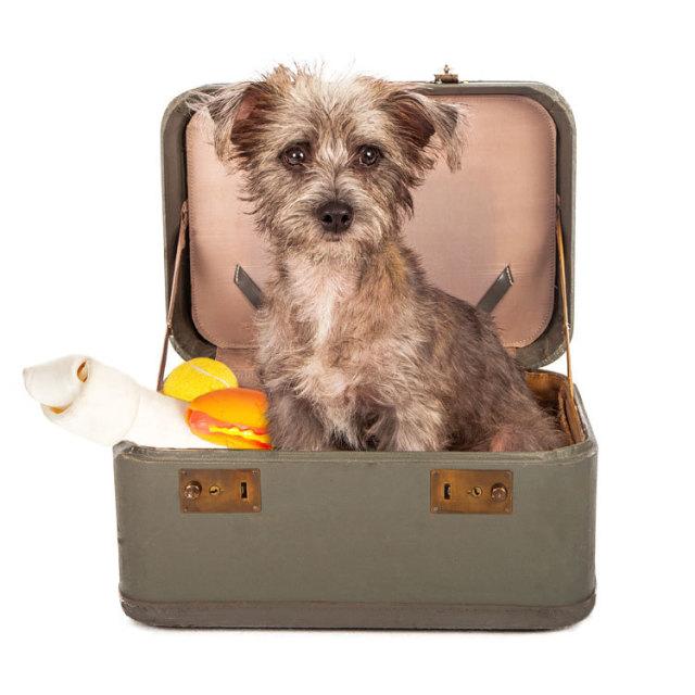 Dog Days Dog Daycare And Hotel