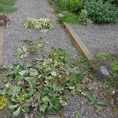 Detritus from pruning spree rfedqx
