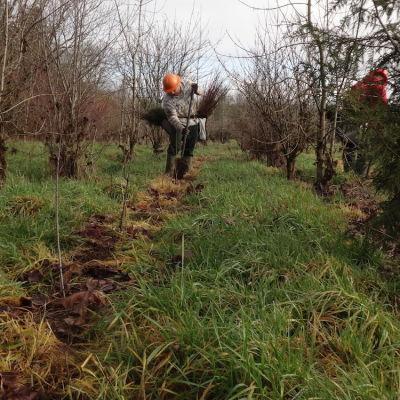 Jan 12 planting 2 h3mtvb