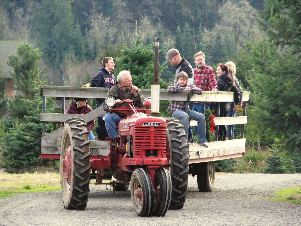 1015 christmas tree farm jkusyd