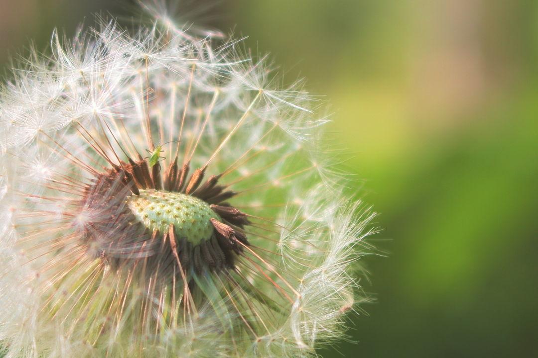 9 Best Ways To Fight Seasonal Allergies