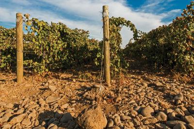 Walla walla rocky wine bnxsvd
