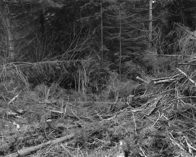 Clearcut, Clatsop County, Oregon, 1999-2002