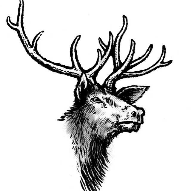 Elk illustration r2cwis