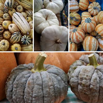 Black acorn fotor collage wxelgl