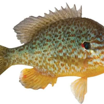 Sunfish elliot bay seattle v7mecd