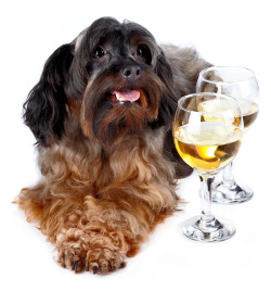 SE Wine Collective's Yappy Hour