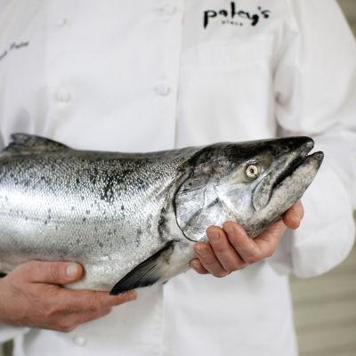 04 065 eatdrink fishy ydjh7w
