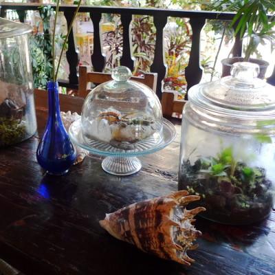 Terrariums on counter icloh3