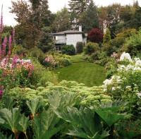garden forest yard
