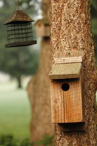 Bird house opener