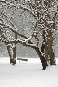 snow park winter