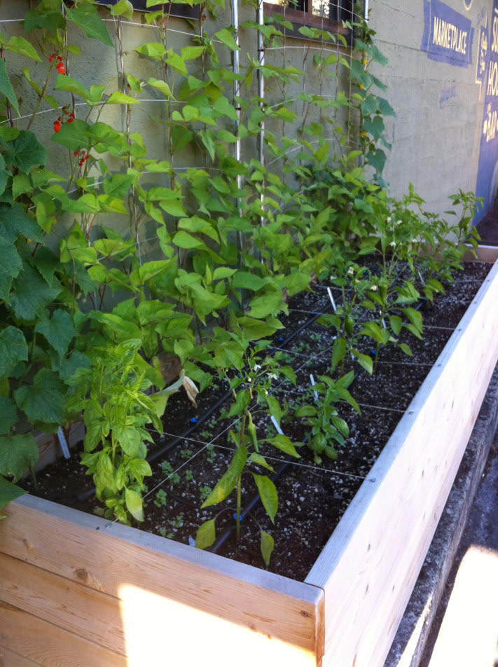 Raised Bed Kits Without Tools or Trouble | Portland Monthly