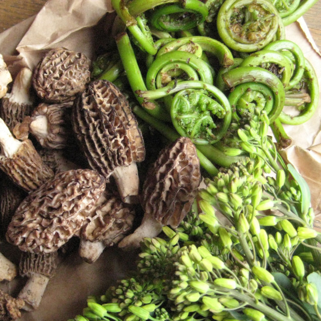 morel mushrooms, fiddleheads, raab