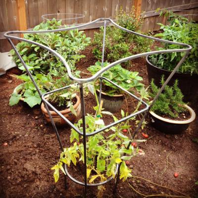 6.13 arborela tomatocage uipbl8