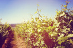Thumbnail for - Popping the Cork on Oregon's Latest Wine News