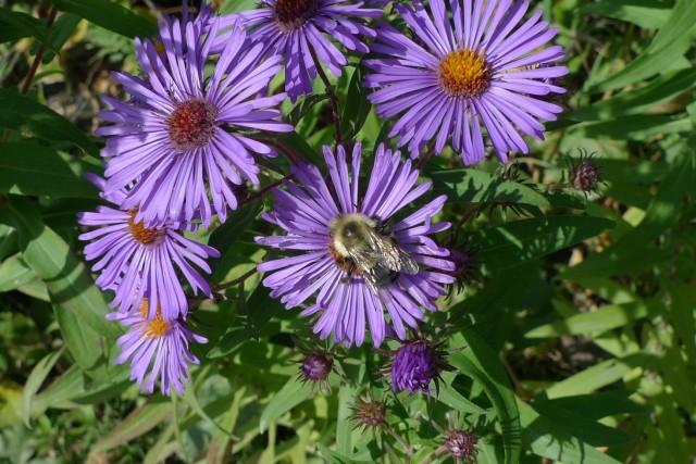 Bee n4gwx3