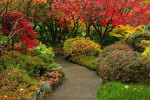 Thumbnail for - Plantwise: Autumn Colors without Trees