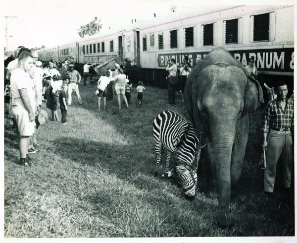 Circus train zzppuf