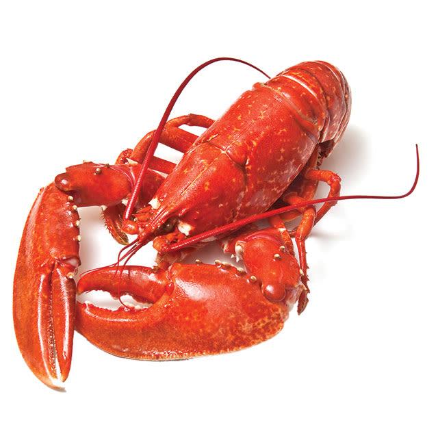 Lobster2 kviang