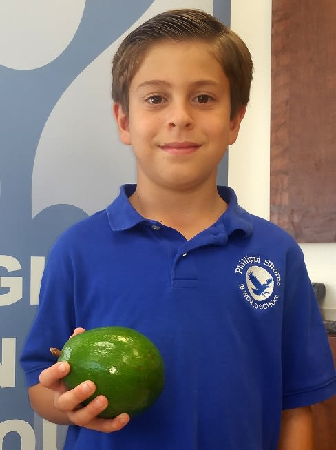 Re avocado ben eller i8ojqy