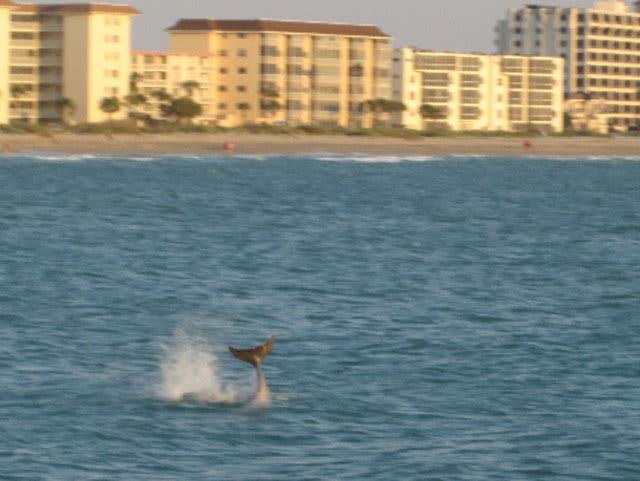 Dolphin tail w0jdei