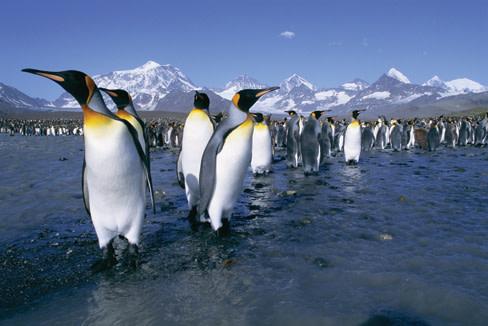 Kingpenguins s4hsxc