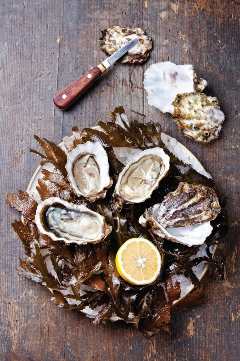 Oysters nvkk40