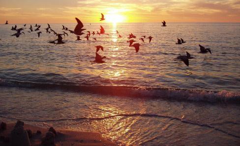 Steve n london birds over sunsetresize h8pvyb