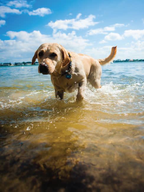 Wetdog irco3t