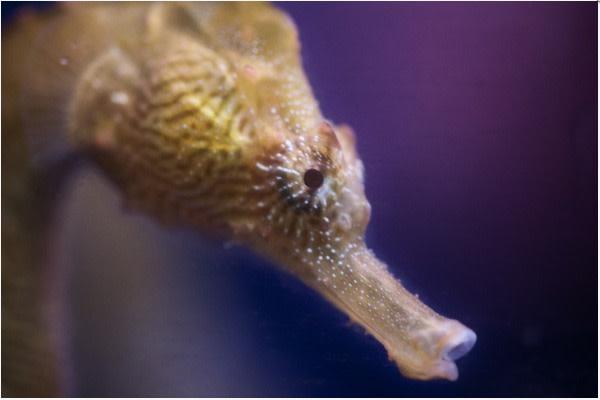 Baby seahorse edit i2mpt4