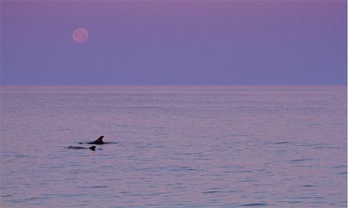 Dolphins resize v2gfz8