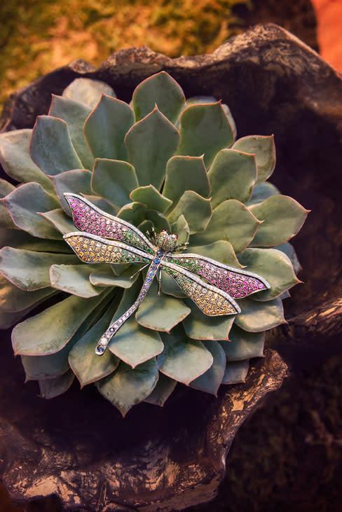 Jewels dragonfly nnytwj