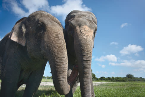 Kenfeld elephants2 tqbtg2