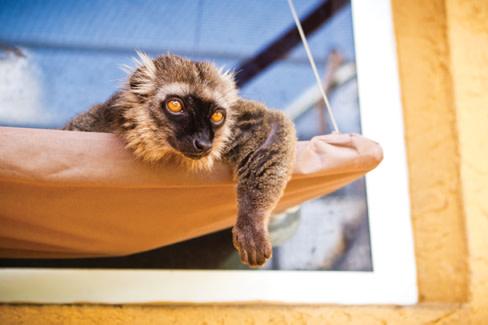 Lemurs3 k3zoge