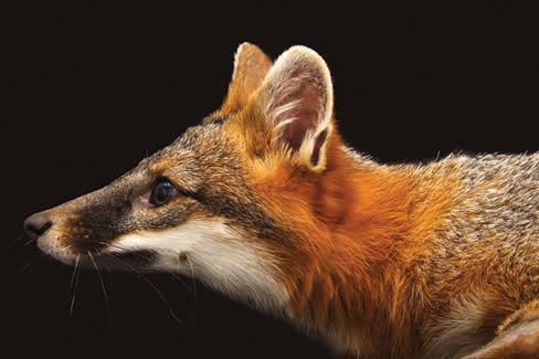 Photoark fox q3syw6