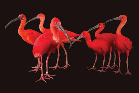 Photoark ibis rov7jt